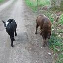 Samen uit wandelen over de Mataramweg