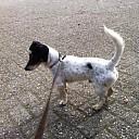 Hond aan komen lopen