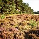 Heide nabij de Heideweg
