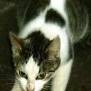 Nog meer kattennieuws bij de Moezenbelt