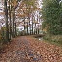 De Mataramweg in Hoonhorst in de mooiste herfstkleuren.
