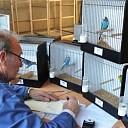 Vogelvereniging houdt jaarlijkse vogelshow