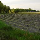 Mais in vloeiende lijnen