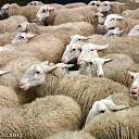 Op Stap met de schaapherder op de Lemelerberg