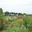 Een bloemenpracht in de tuin van mevrouw Schiphorst