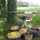 Appels opbrengst voor goede doel