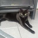 Kat vermist (update)