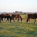 25 okt. rommelmarkt en paarden verwennen