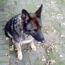 Wie mist deze hond? Eigenaar nog steeds niet gevonden UPDATE