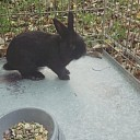 Zwart konijn gevonden