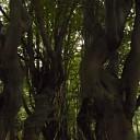 Heksenlaantje in Mataram