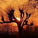 Dalfsuh bij zonsondergang