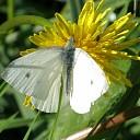 Wordt dit jaar jouw vlinderjaar?