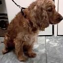 Hond gevonden in de Wilhelminastraat (update)