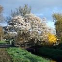 Het is volop lente in Lenthe