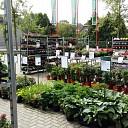 Gratis plantje bij Welkoop Dalfsen