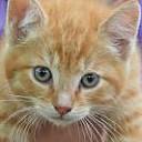 Oranje kitten was vermist: weer terug!