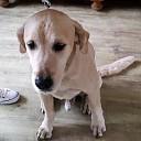 Hond gevonden en weer thuis