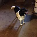 Hond gevonden Hessenweg en weer op de plek