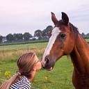 Rommelmarkt en paarden knuffelen, het kan weer