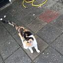 Van wie is die kat