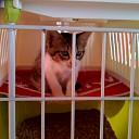 Kitten vermist