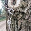 Sleutels van een boom?