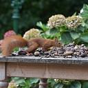 Haal uw noten droog binnen