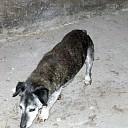 Wie mist zijn hondje? Al weer opgelost.