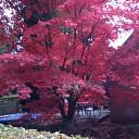 Bloeiende boom in de herfst.