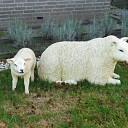 Moeder met haar lam