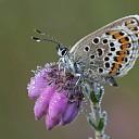 Nominaties biodiversiteitsprijs Overijssel bekend
