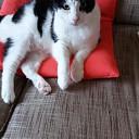 Kat vermist en ook weer terug