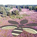 Winnende bij-bloem op de Lemelerberg te zien