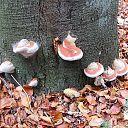 Bomen overleven paddenstoelen niet