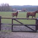 Leuk: weer paarden knuffelen en tevens rommelmarkt
