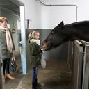Je kunt weer paarden knuffelen tevens rommelmarkt