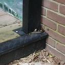 Zie ik opeens een slang in mijn tuinhuis