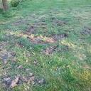 Dassen op het veld
