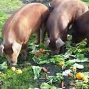Eet elke dag genoeg groente en fruit
