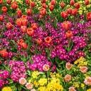 Hoonhorst en Wythmen 3 mei in kleur