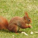 De eekhoorns van Anton hebt het veurjoor in de kop