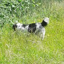 Loslopende hond