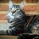 Vermiste kat is weer terug