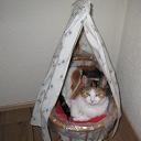 Kat vermist  en weer terug