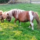 Ini mini pony terug van vakantie