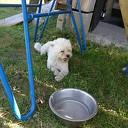 Hond gevonden