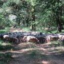 Deze week 200 schapen op Rechterenseveld