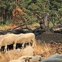 Nieuws van de boswachter: Wie de kudde nog wil zien moet snel zijn