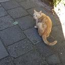 Kat gevonden